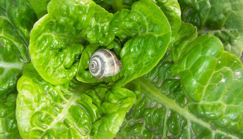 ¿Cómo combatir los caracoles de forma ecológica?