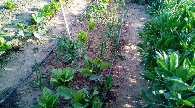 Rotación de cultivos- Portal Jardín