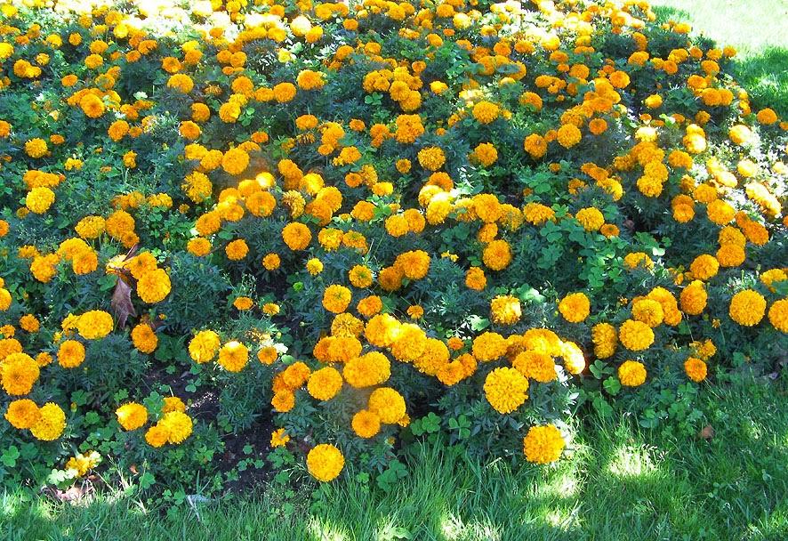 El jardín en octubre