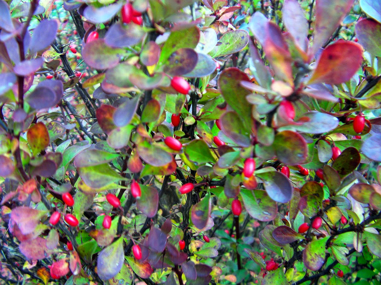 el jardín en diciembre