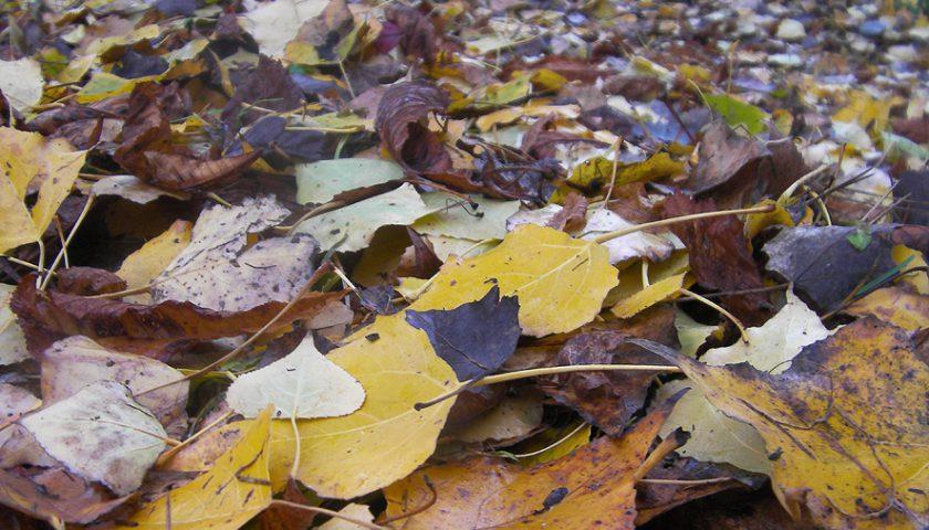 Acolchado de hojas secas