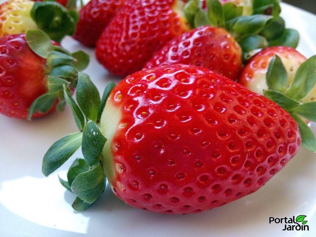 Fresas: cuidados, propiedades y receta