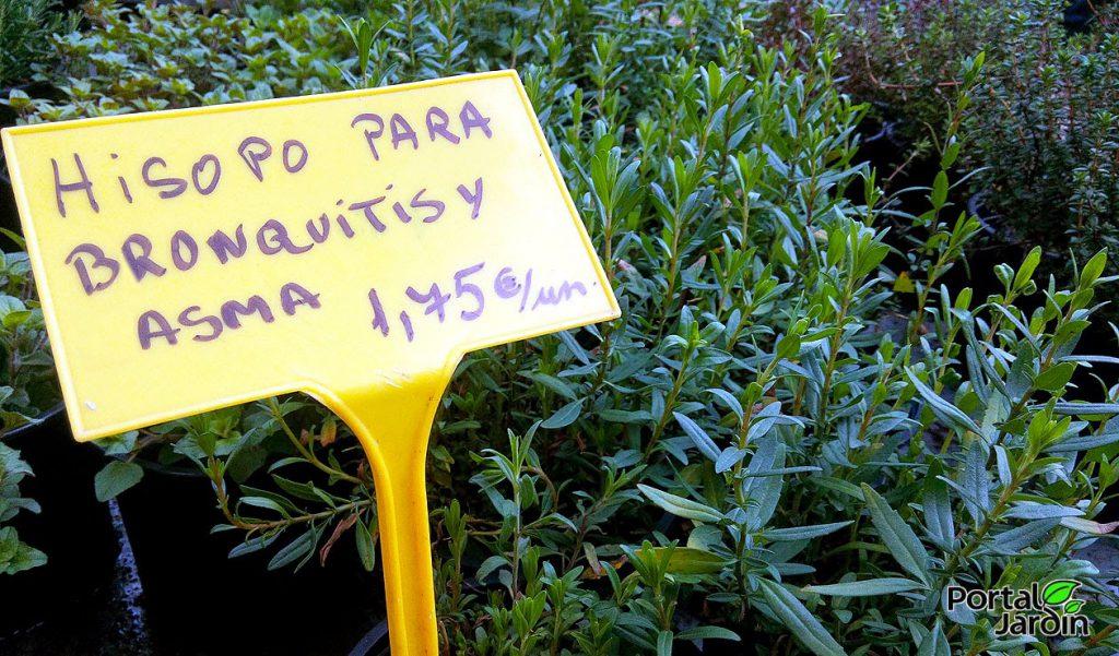Plantas aromáticas. Portal Jardín.