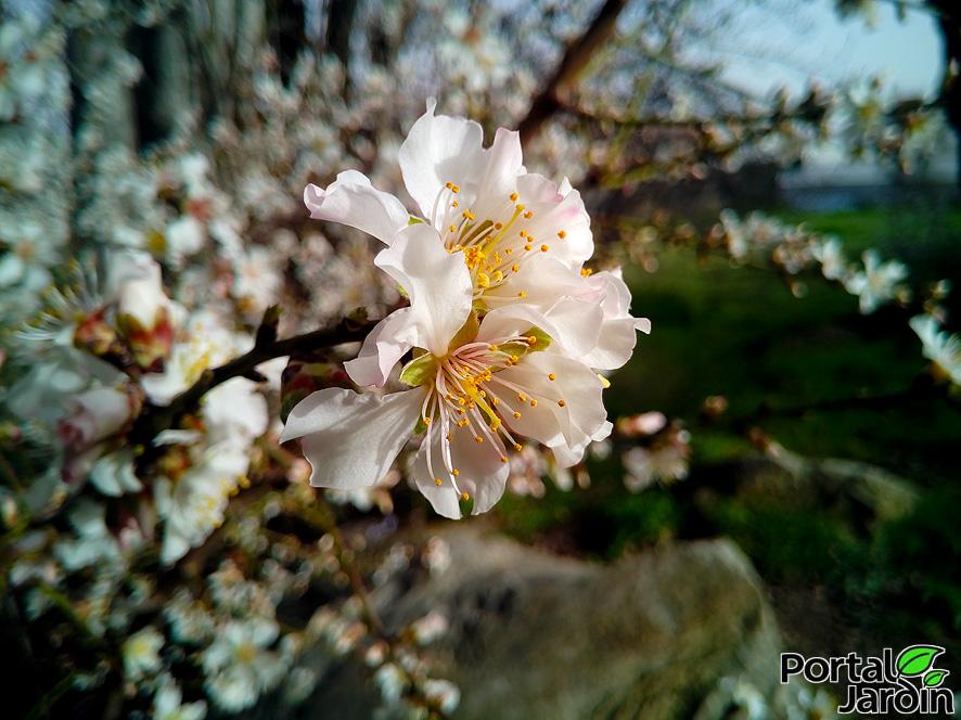 Arbustos, árboles frutales y ornamentales. Portal Jardín.