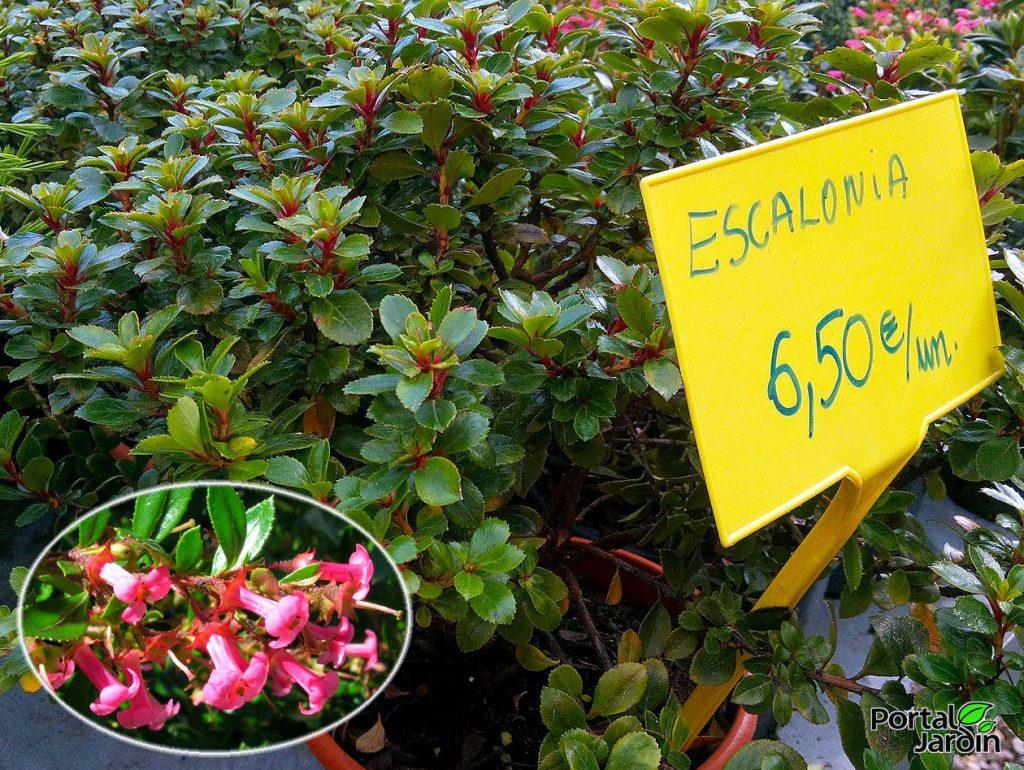 Plantas de primavera. Portal Jardín. Huerto, Jardín y Cocina.