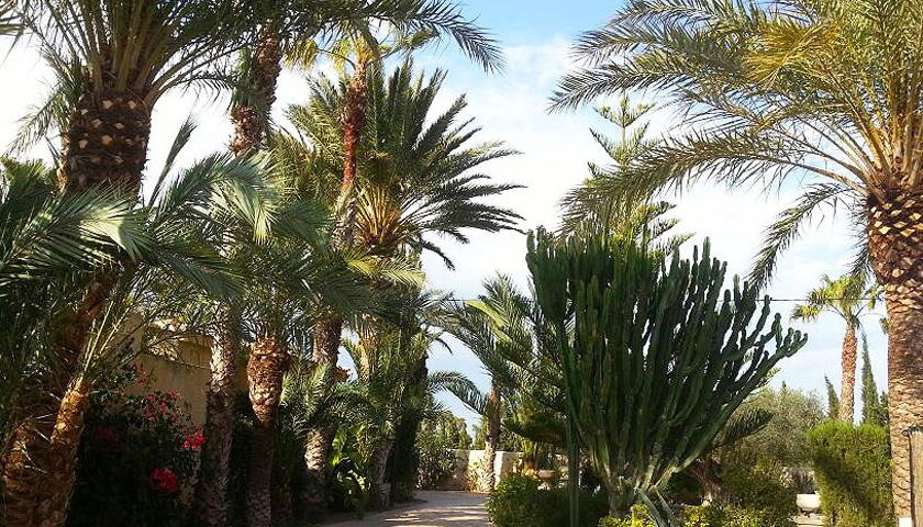 Amigos de Portal Jardín: El jardín de Nina en La Marina, Elche.