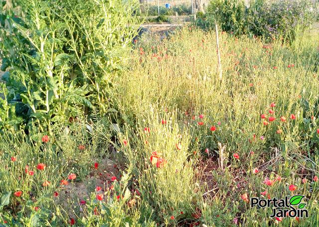 Empezar el huerto desde cero. Portal Jardín - Huerto, Jardín y Recetas.