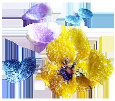 Flores comestibles Portal Jardín