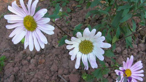 Flores Portal Jardín