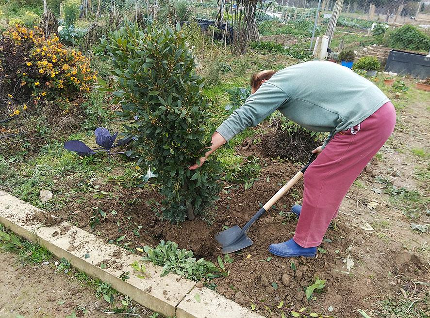 trasplantes huerto Portal Jardín