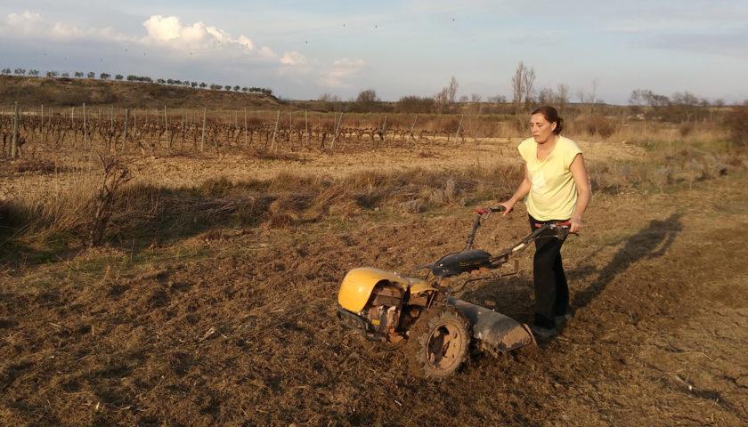 Preparando y planificando el huerto