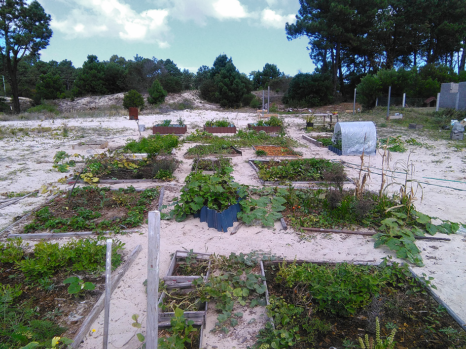 Huerto en la arena - Portal Jardín