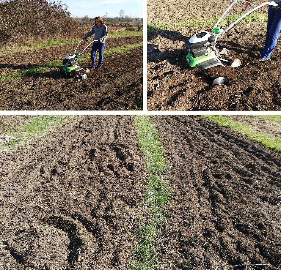 Preparando el huerto con la motoazada o mula mecánica Portal Jardín