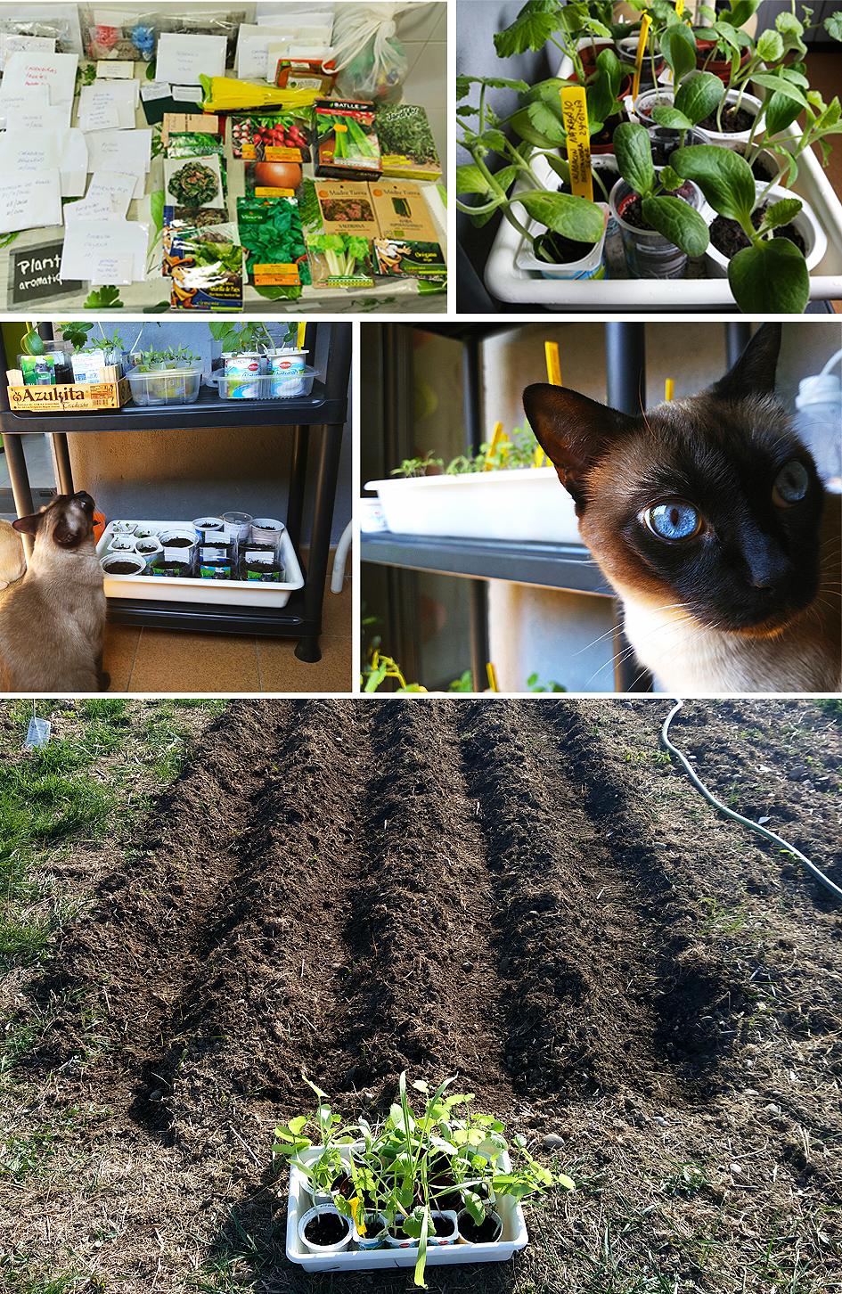 semilleros Preparando el huerto con la motoazada o mula mecánica Portal Jardín