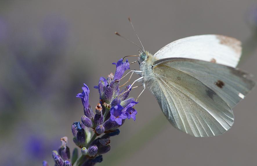Orugas y Mariposas Portal Jardin