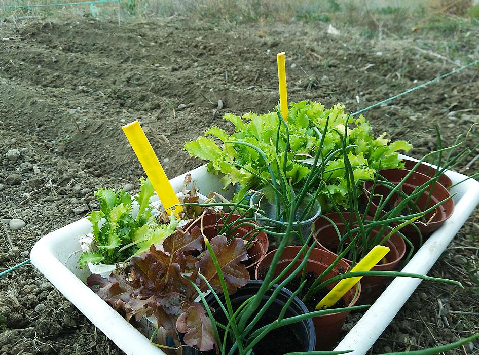 cultivos de otoño
