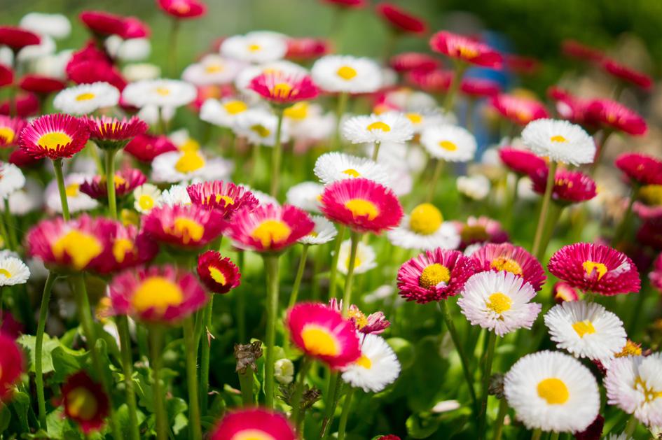 Flores para el otoño invierno