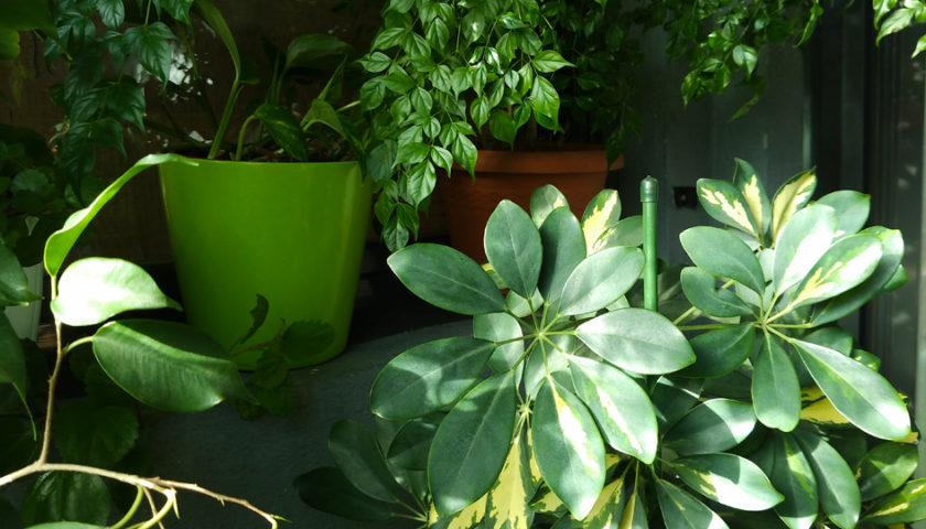 plantas que nunca mueren
