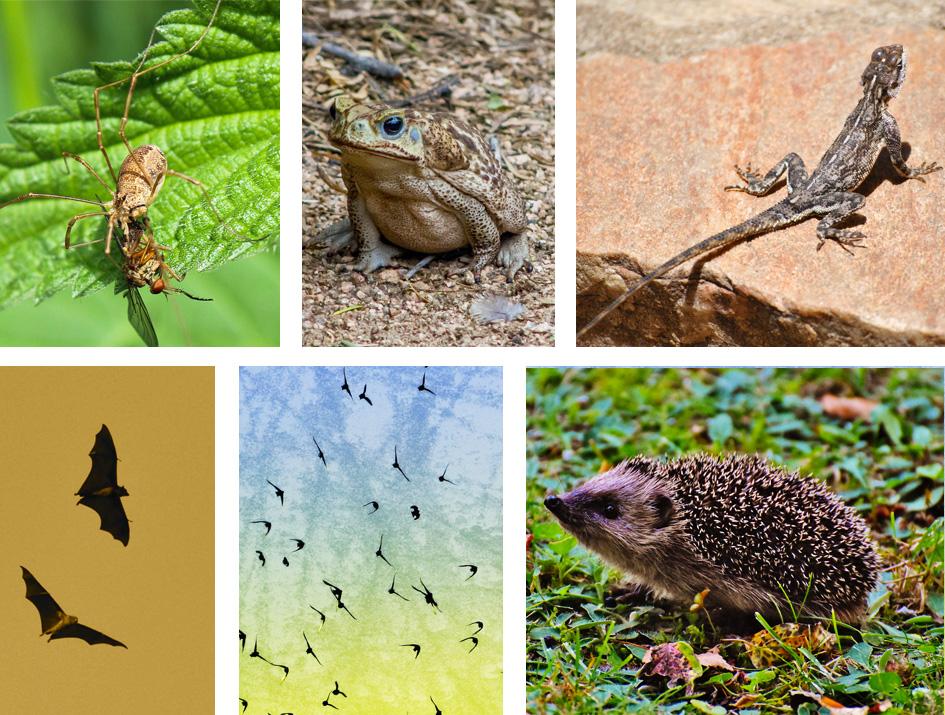 plantas y animales anti mosquitos