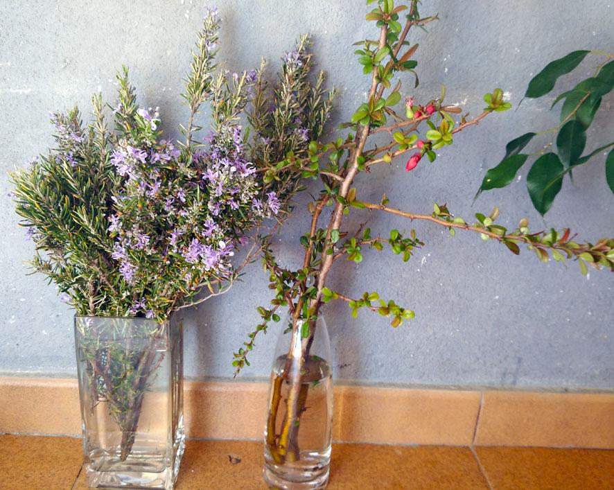 Cómo reproducir las plantas