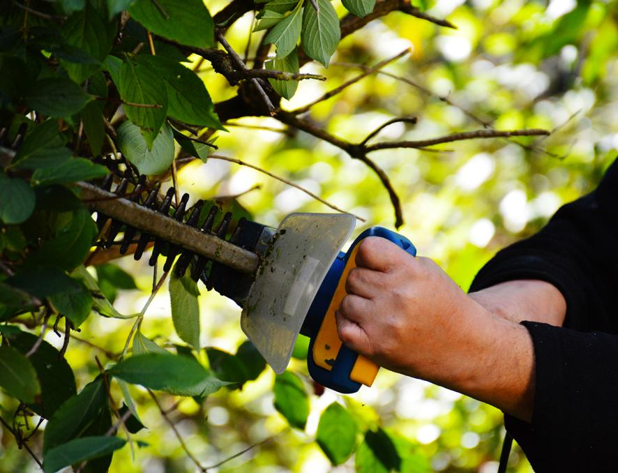 3 claves para mantener impecable nuestro jardín