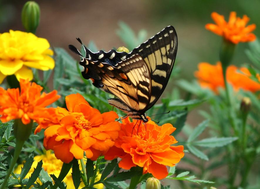 Plantas que atraen insectos beneficiosos