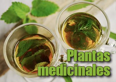 Plantas medicinales en ebook