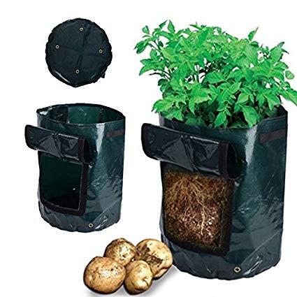 Bolsa siembra patatas