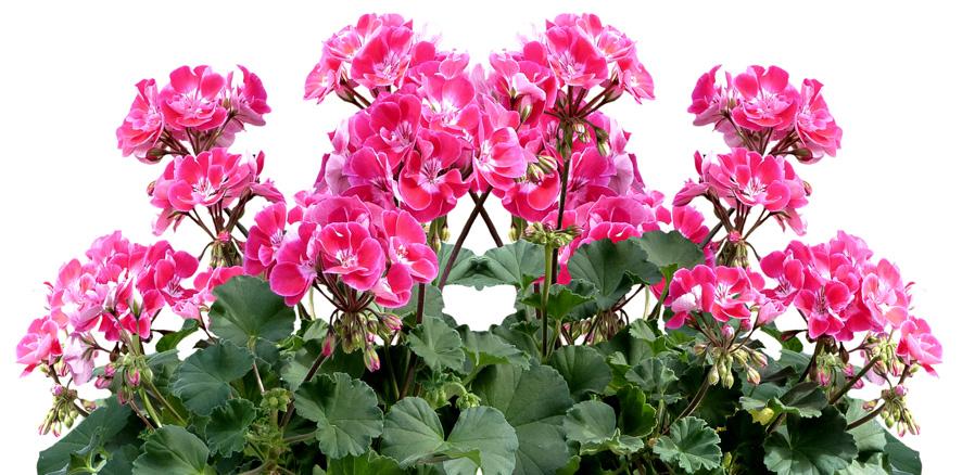 flores de invierno Portal Jardín