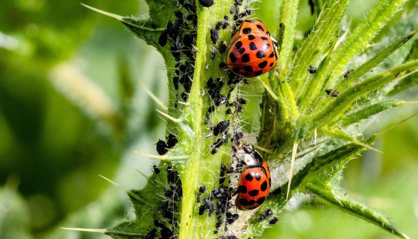 Plagas más comunes del huerto y el jardín