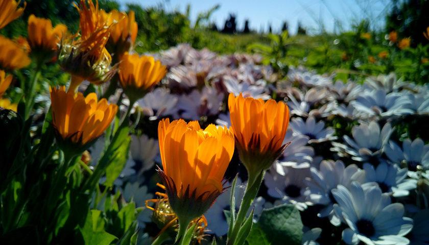 Las mejores plantas para el verano
