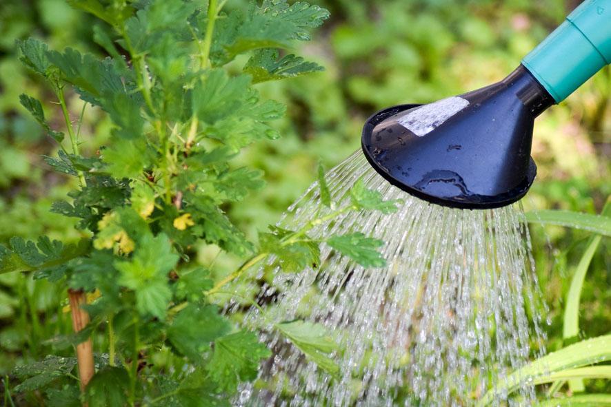 La mejor agua para regar las plantas