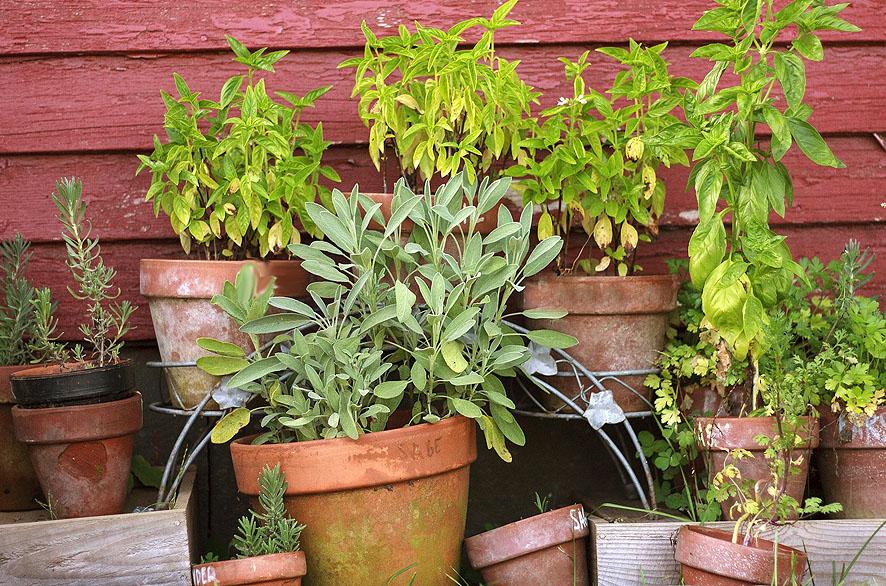 Cómo convertir tu balcón en un jardín