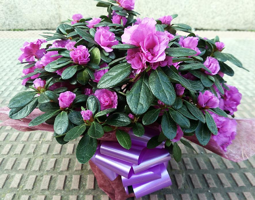 las mejores plantas con flores