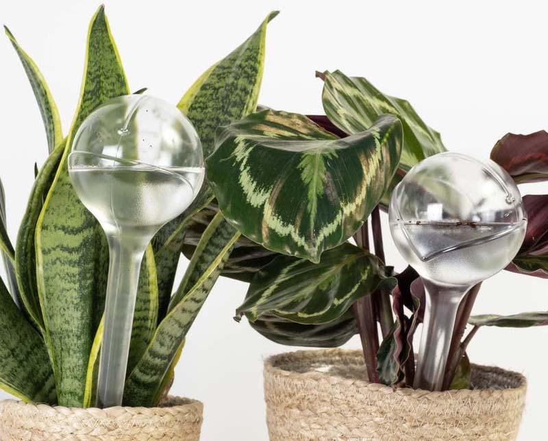 cuidado de las plantas en vacaciones
